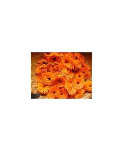 Olej nagietkowy (Calendula)